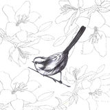 Sparrow. Handpaint  background pattern bird sparrow vintage lily illustration Stock Images