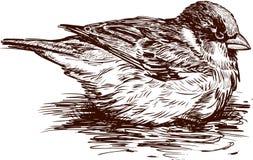 Sparrow i en slå samman Royaltyfri Fotografi