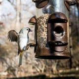 Sparrow  Landing on a Bird Feeder Stock Photos