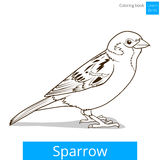 Sparrow learn birds educational game vector Royalty Free Stock Photography