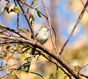 Sparrow in nature. In the park in nature Stock Photo