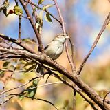 Sparrow in nature Stock Photos