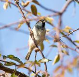 Sparrow in nature. In the park in nature Royalty Free Stock Photography