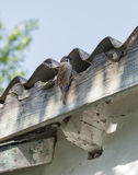 Sparrow near the nest under roof Royalty Free Stock Photo