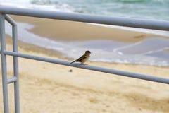 Sparrow near the sea Stock Photos
