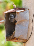 Sparrow and nest in a cabinet with electrical meter Stock Image
