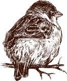 Sparrow på en filial Royaltyfri Foto