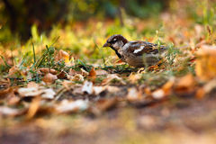 Sparrow in the Park stock photo