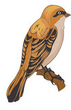 Sparrow or Passeridae, illustration Stock Image