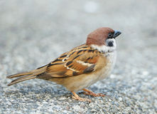 Sparrow perched on a branch Stock Photo