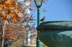 Sparrow perched on a flowerpot. And looking at the around stock image
