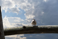 Sparrow perched on the last rays of sun. In autumn Royalty Free Stock Photography
