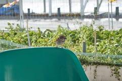 Sparrow photo on the village street stock photography