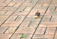 Sparrow and a piece of bread Royalty Free Stock Image