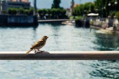 Sparrow on a rail Royalty Free Stock Photos