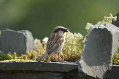 Sparrow , relaxing in sunny day. Green, water, animals what a lovely day stock photography