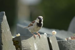 Sparrow , relaxing in sunny day. Green, water, animals what a lovely day royalty free stock images