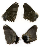 Sparrows wings Stock Image
