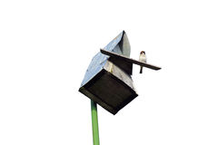 Sparrow sits at the entrance to the birdhouse. Isolated Royalty Free Stock Photos