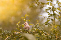 Sparrow sitting on a branch against a beautiful background . Artistic image with a bird. stock image