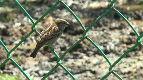 Sparrow sitting on a metal grid