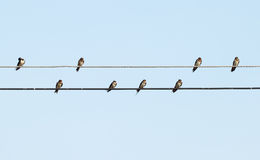 Sparrow sitting on the power cable Royalty Free Stock Photos