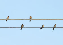 Sparrow sitting on the power cable Stock Image