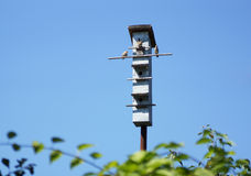 Sparrow sitting on the roof of the birdhouse. Stock Images