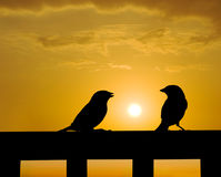 Sparrow small talk under sunset Stock Photo
