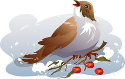 Sparrow in a snow. This illustration depicts a sparrow eats red berries on snow Stock Photo