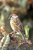 Sparrow standing on plants Stock Photo