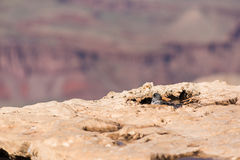 Sparrow taking a bath with the Grand Canyon in the background Stock Photos