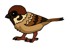 Sparrow. Vector illustration of a cartoon sparrow Stock Photo