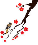 Sparrow. Vector illustration of a sparrow and cherry blossom Stock Photo
