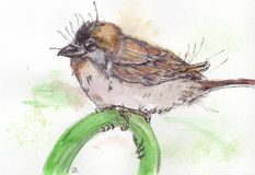 Sparrow. Wathercolor ink bird sparrow Royalty Free Stock Image