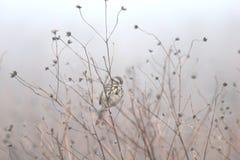 Sparrow in weeds Stock Photo