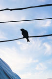 Sparrow on a wire silhouette Royalty Free Stock Photos