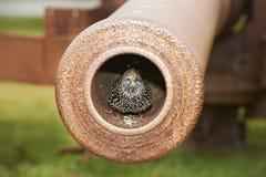 sparrowen för öppningen för 2 ca kriger den sittande världen Royaltyfri Foto