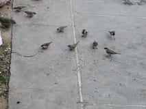Sparrowes stock photos