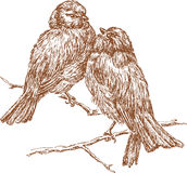 Sparrows. Vector image of a two sparrows sitting on a branch Royalty Free Stock Image