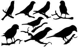sparrows vektor illustrationer