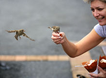sparrows royaltyfri bild