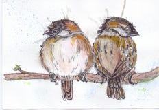 sparrows Immagine Stock Libera da Diritti