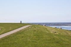 Sparrows around monument near Noordkaap, Holland Royalty Free Stock Photo