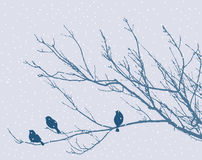 Sparrows on a branch Stock Images