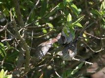 Sparrows caught in the garden Stock Photography