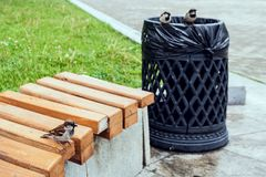 Sparrows in city park sit one on bench and two on urn. Selective focus Stock Photography