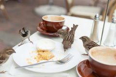 Sparrows dine at local cafe. Sparrows dine uninvited at local cafe when patron sleave Stock Images