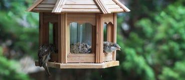 Sparrows in the feeder Stock Photos