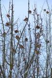 Sparrows on frozen tree stock photo